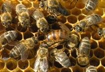 Общество пчеловодов Нектар
