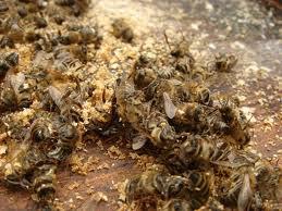 Аспекты зимовки пчел