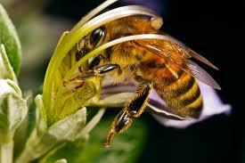 Новые разработки Института пчеловодства
