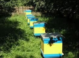 Выживание пчел во время спячки