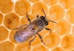 Издания пчеловодства России