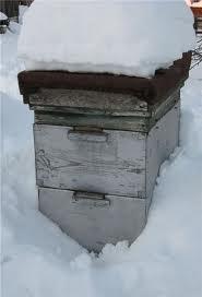 Пчелы после зимовки