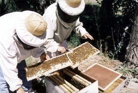 Правильная зимовка пчел