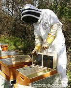 Как выбрать пчелиный мед