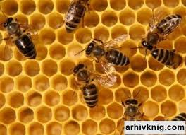 Куда пойти учится на пчеловода