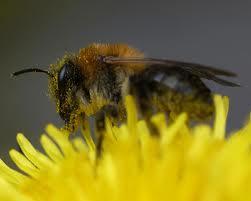 Простой уход за пчелами