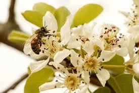 Пчеловодческий риск